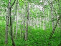木材原料の調達方針